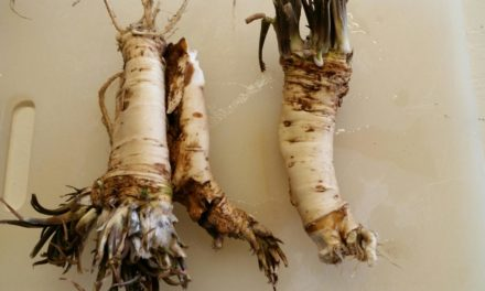 Horseradish the easy way