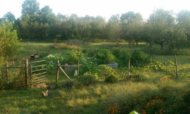 Plan Next Year's Garden Today