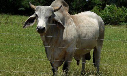 Feminism: A load of bull.