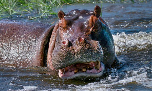 Hippo Camp
