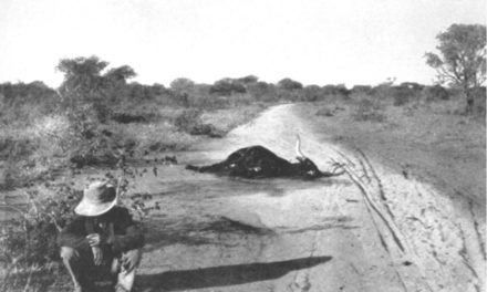 Sunshine and Storm in Rhodesia (Part 15)
