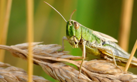 Sermon: The Years the Locust Has Eaten
