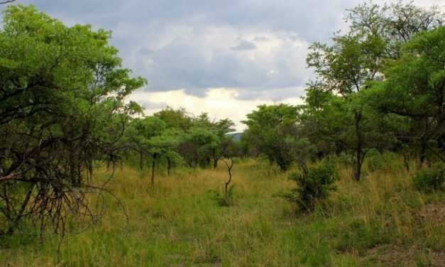 Sunshine and Storm in Rhodesia (Part 26)