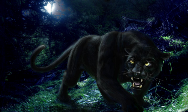 The Chase of the Panther (Part 2)