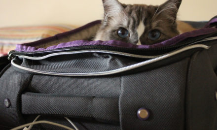 Stuffing The Cat Back In The Bag