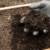 David The Good: Making Your Compost Hot Again