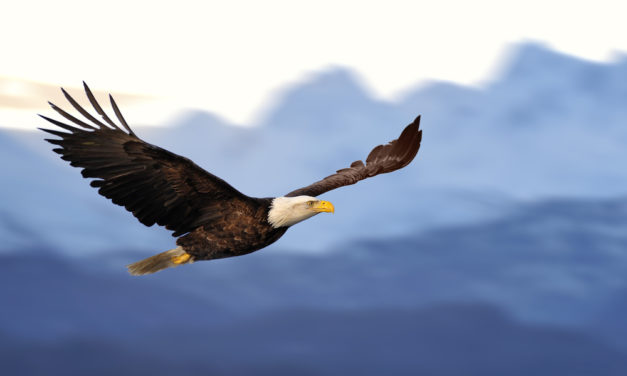 The Eagle's Nature