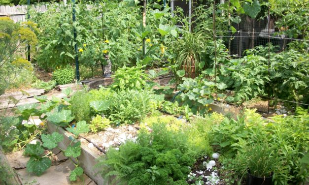 David The Good: Seven Ways To Feed Your Garden For Free