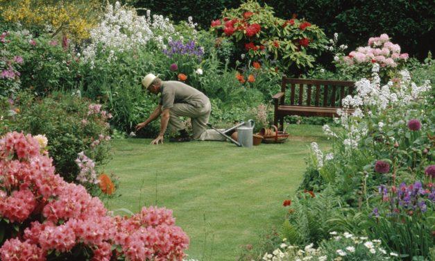 Bacteria Soup For Your Garden