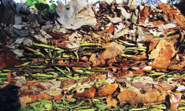 Video: DTG On Lasagna Gardening