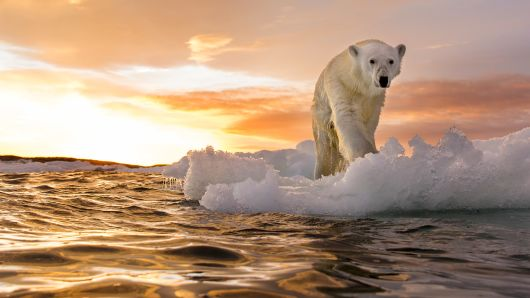 Vox Day: Whatever Happened To Global Warming?