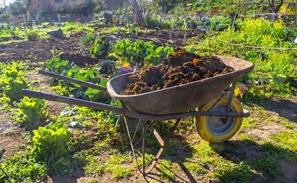 Video: Will Manure Kill Your Garden?