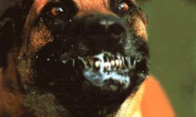 I Just Shot Your Dog