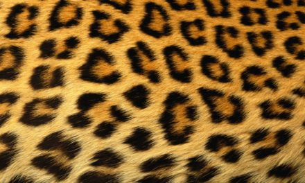 Can A Leopard Change His Spots?