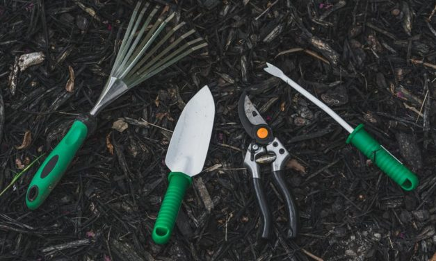 Video: David The Good's 10 Favorite Gardening Tools